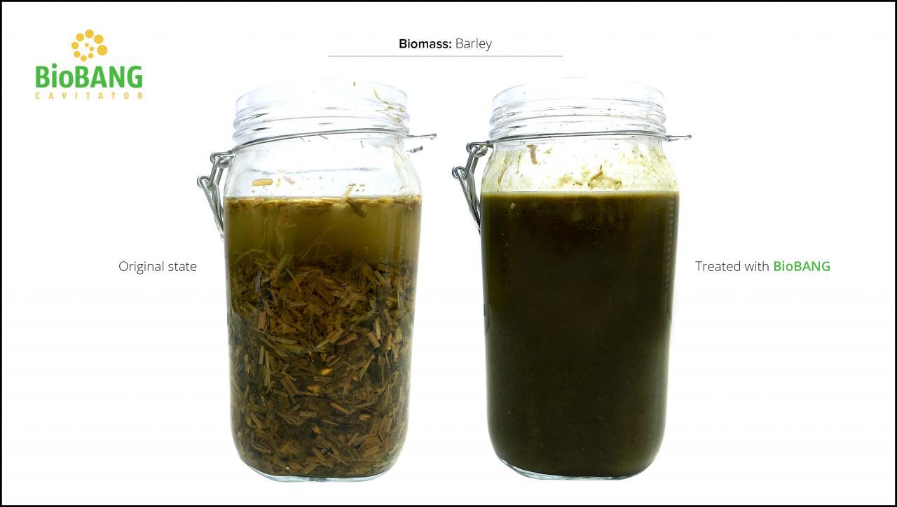 biomass-test-barley-4