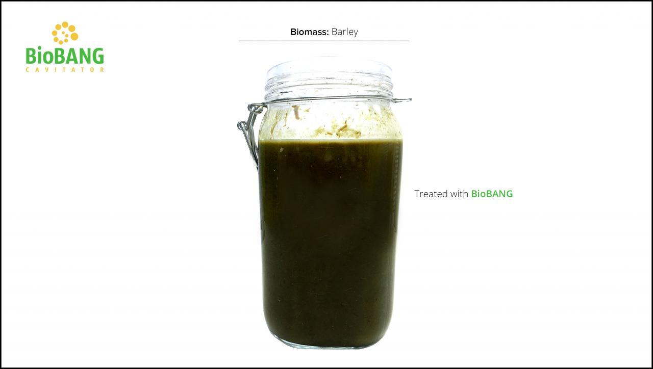 biomass-test-barley-6