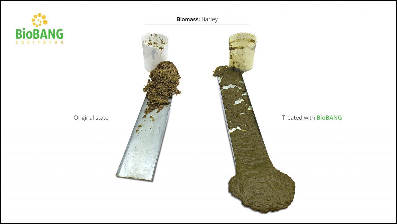 biomass-test-barley-7