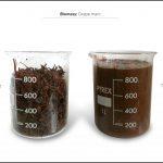 biomass-test-grape-marc-4