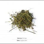 biomass-test-moringa-1