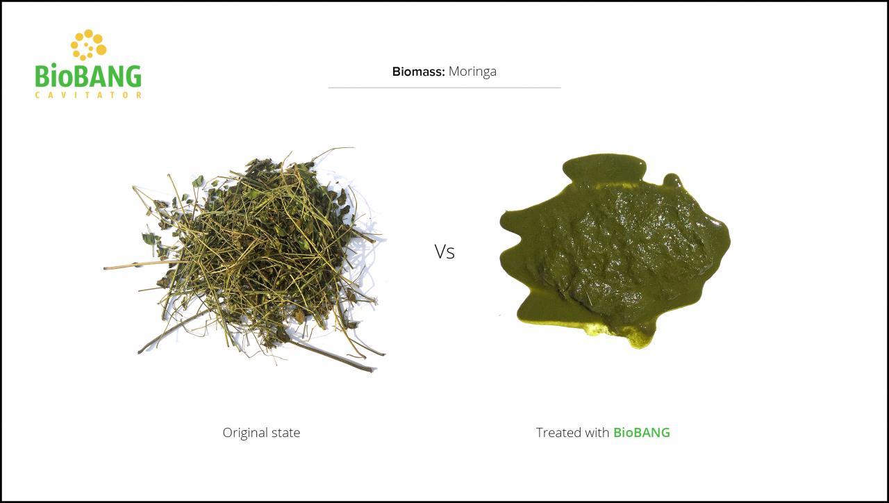 biomass-test-moringa-3