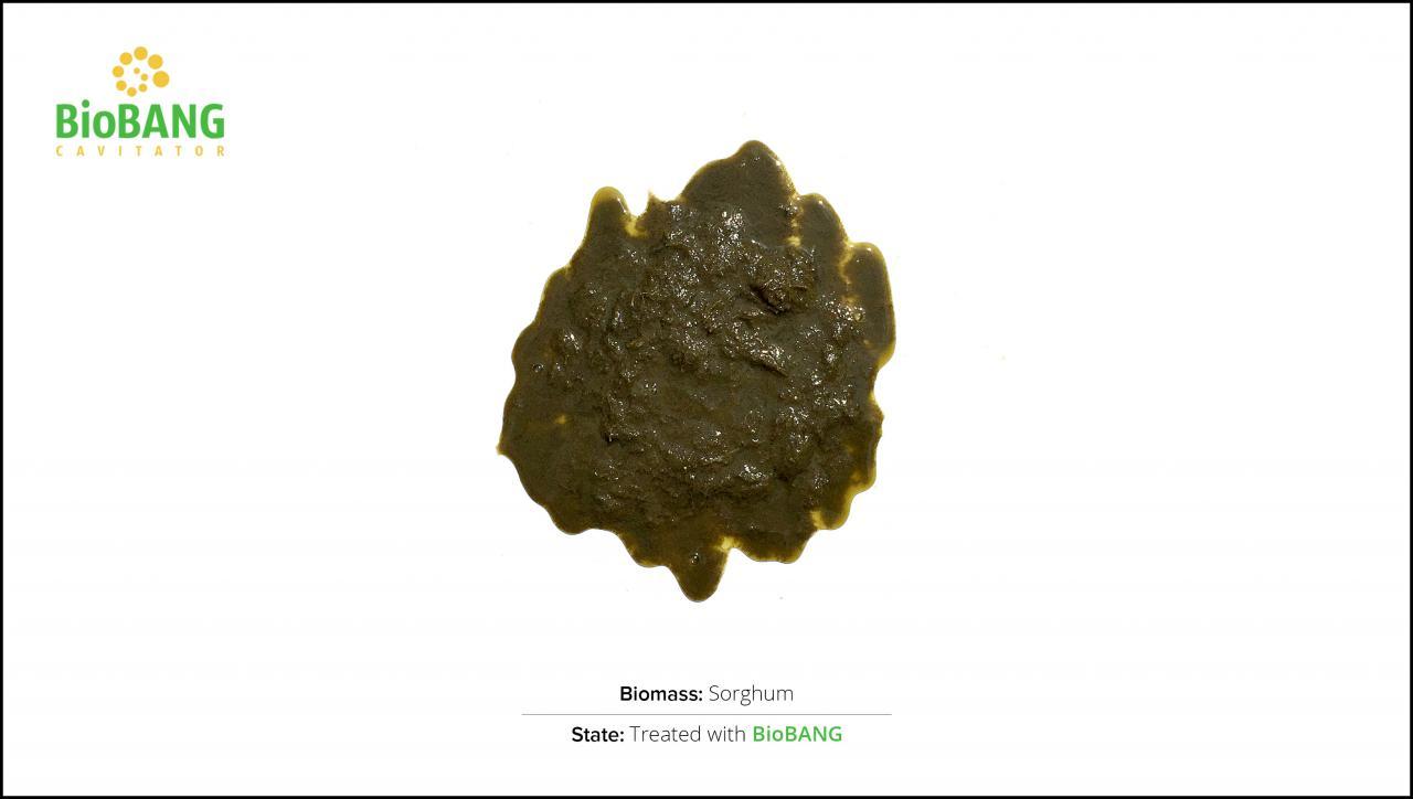 biomass-test-sorghum_2