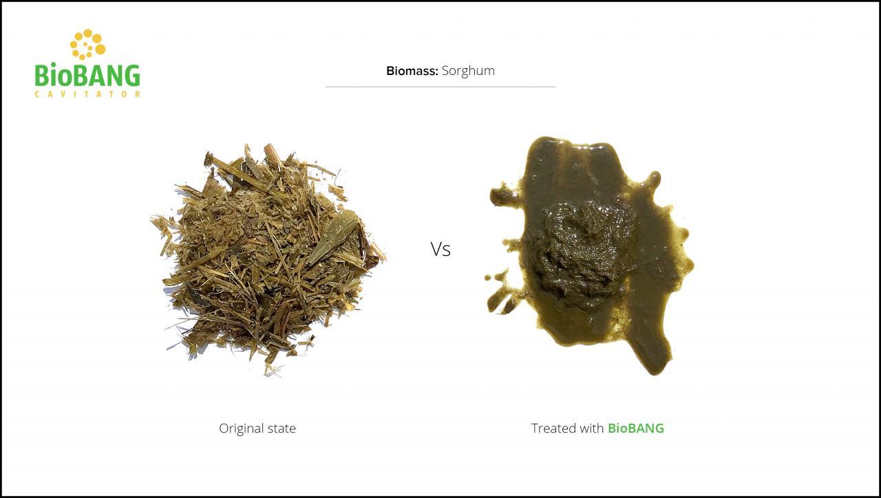 biomass-test-sorghum_3