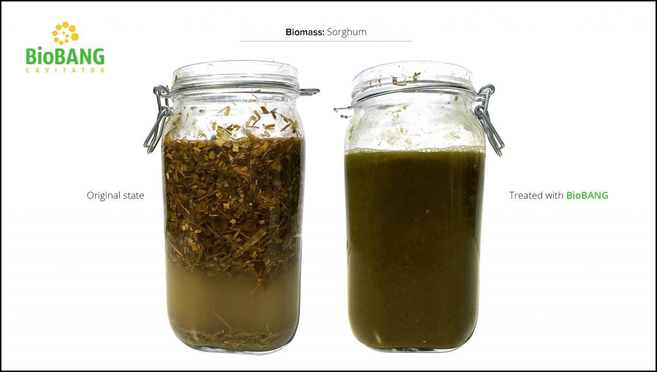 biomass-test-sorghum_4