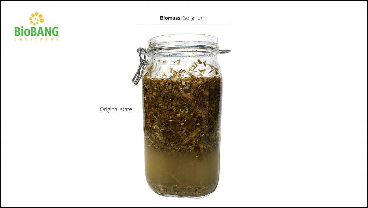 biomass-test-sorghum_5