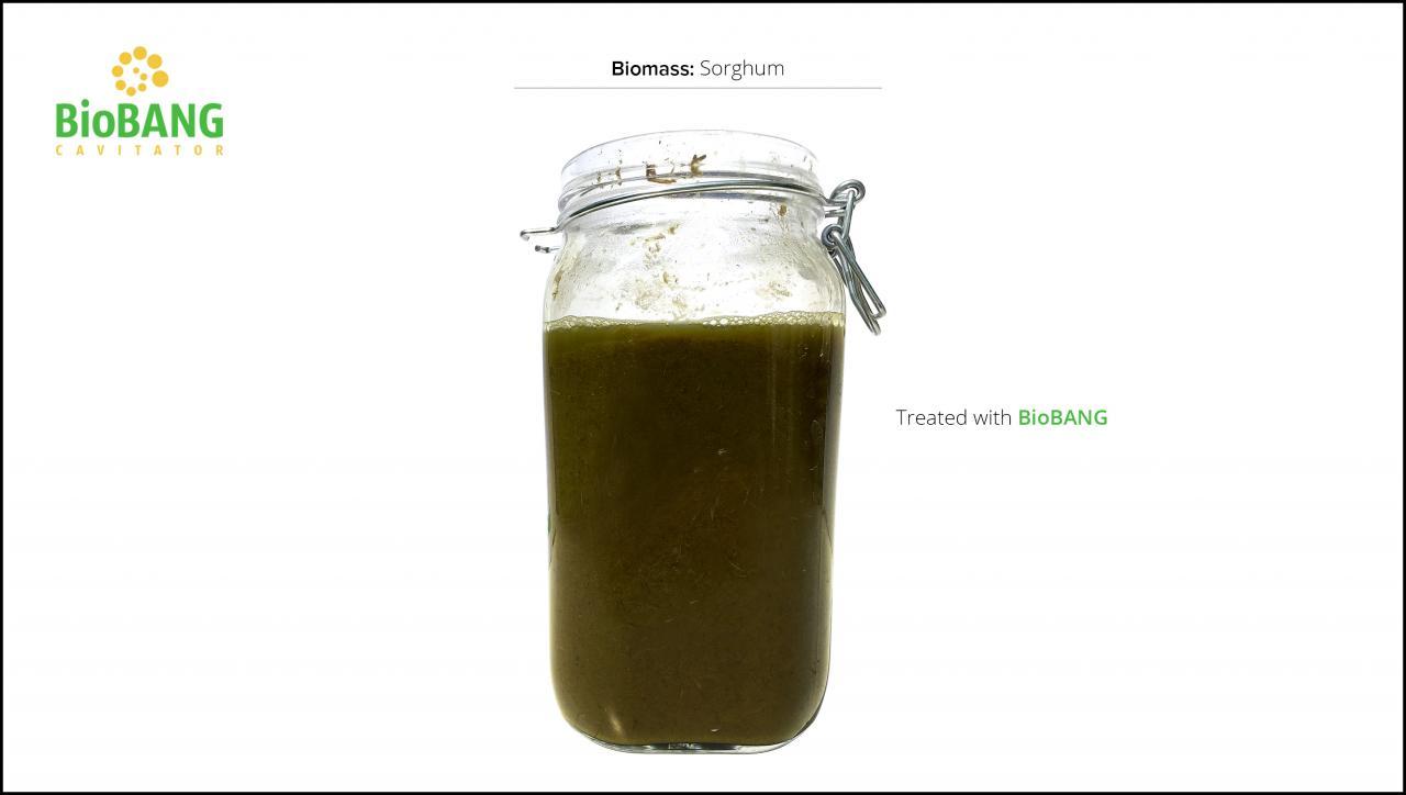 biomass-test-sorghum_6