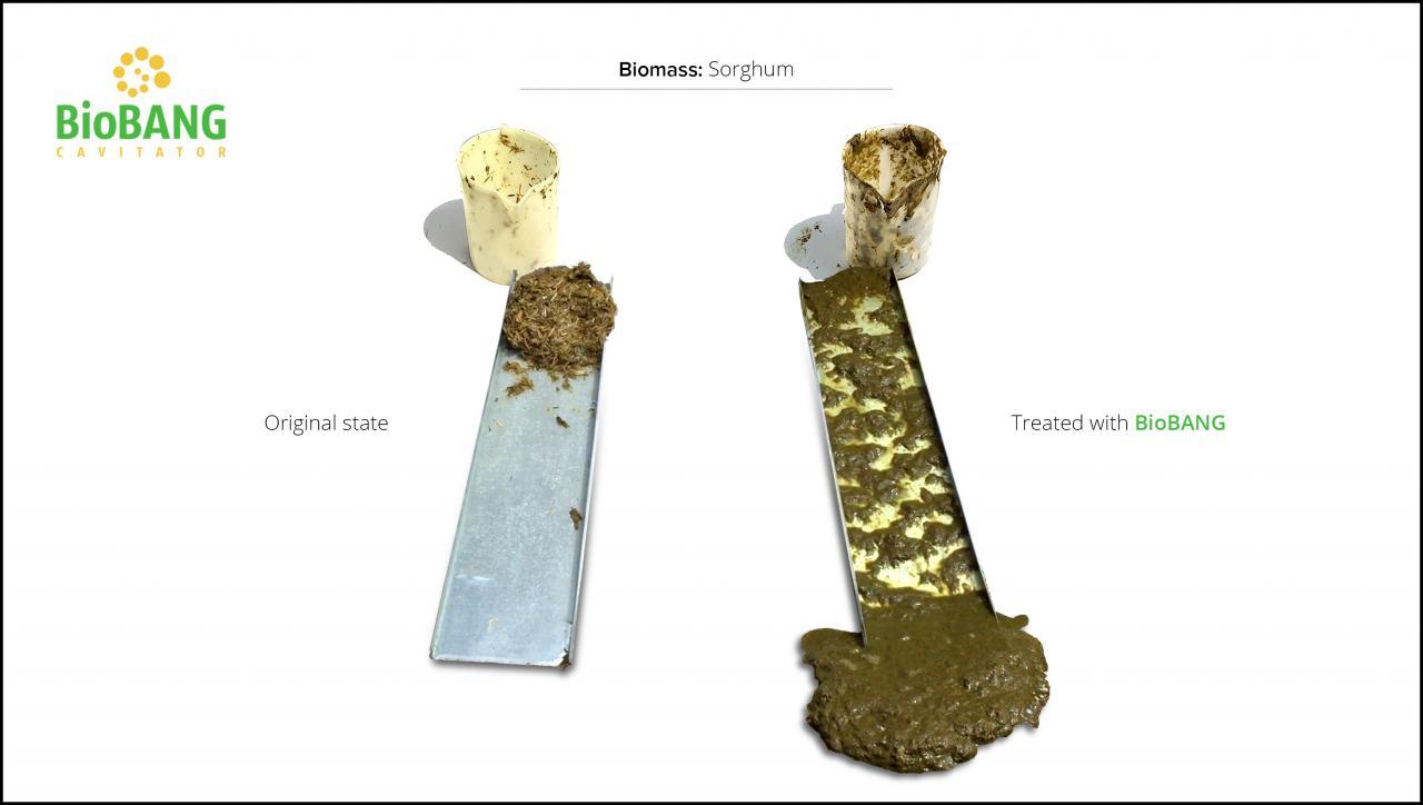 biomass-test-sorghum_7