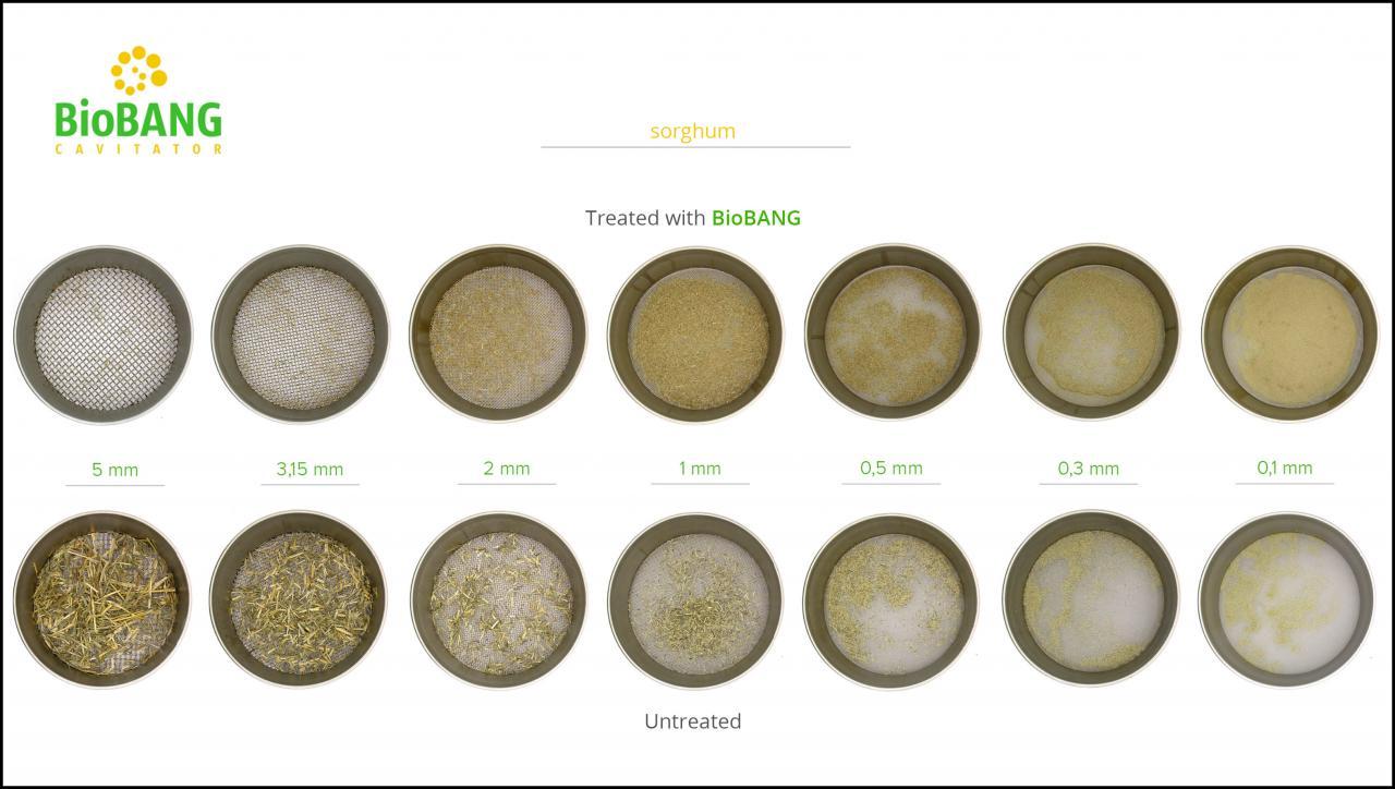 biomass-test-sorghum_8