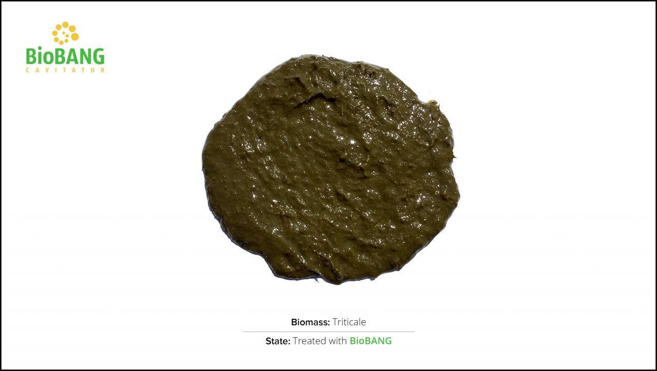 biomass-test-triticale_02