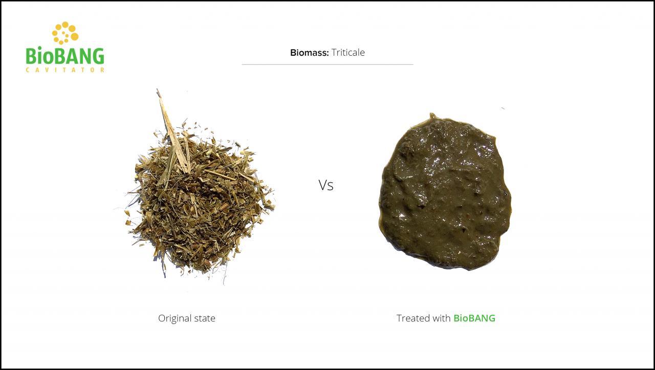 biomass-test-triticale_03