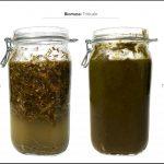 biomass-test-triticale_04