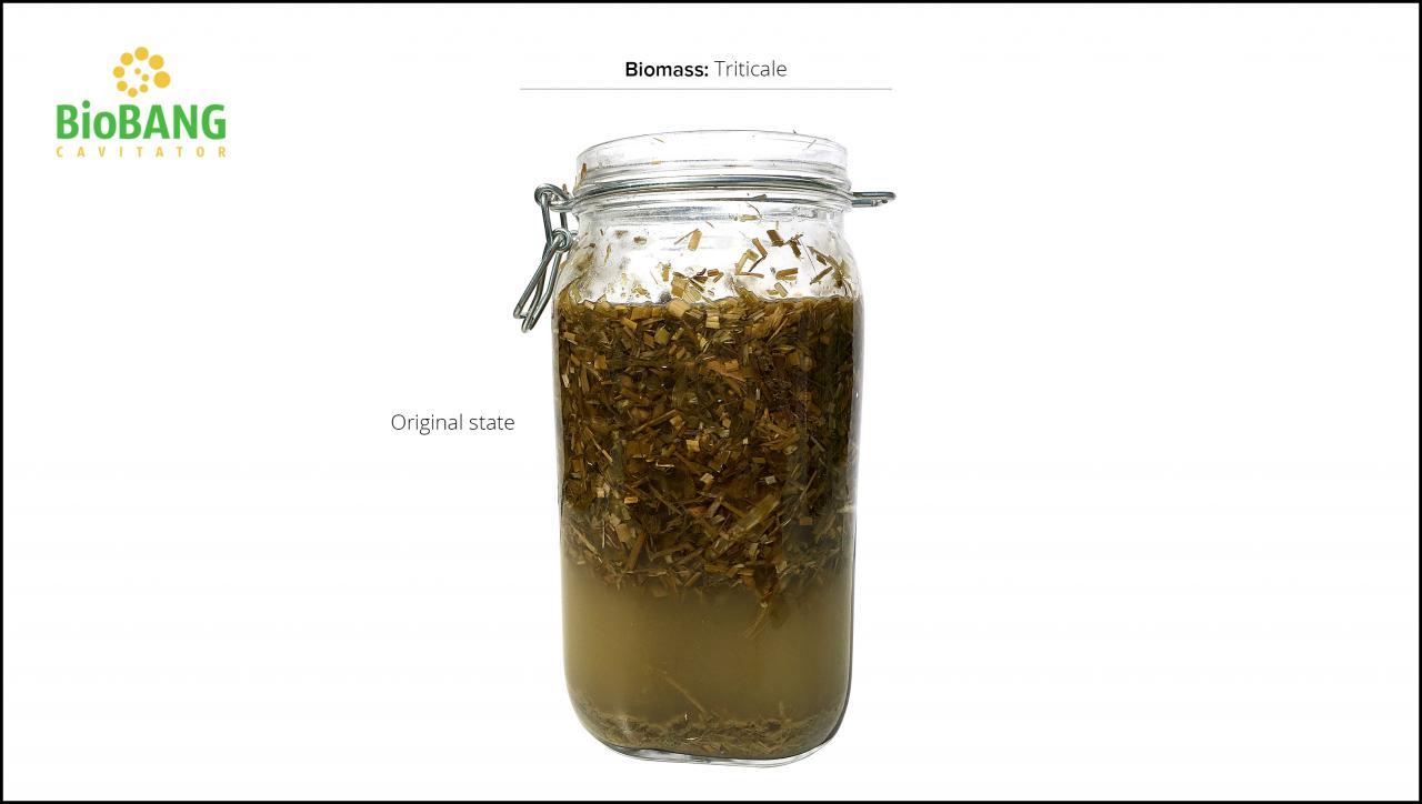 biomass-test-triticale_05