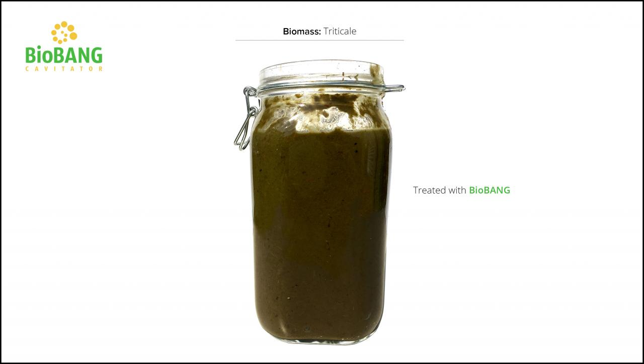 biomass-test-triticale_06