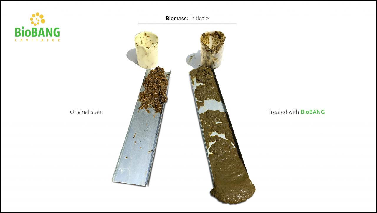 biomass-test-triticale_07