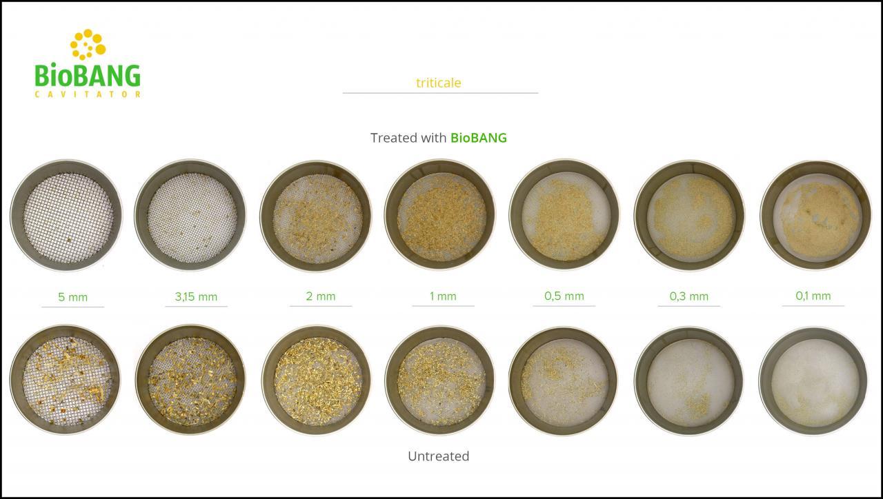 biomass-test-triticale_08
