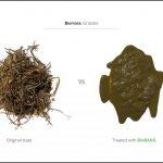 biomasse-test-græs_3