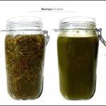 biomasse-test-græs_4