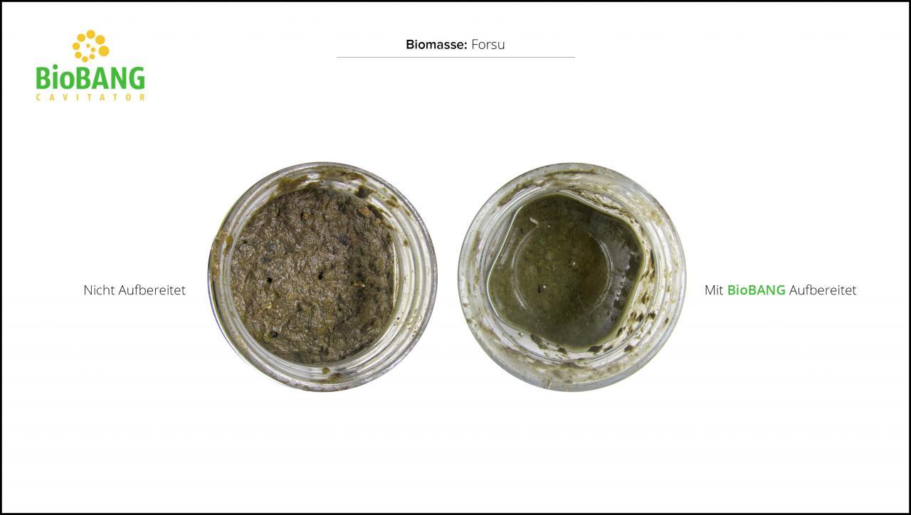 biomassen-test-forsu-4