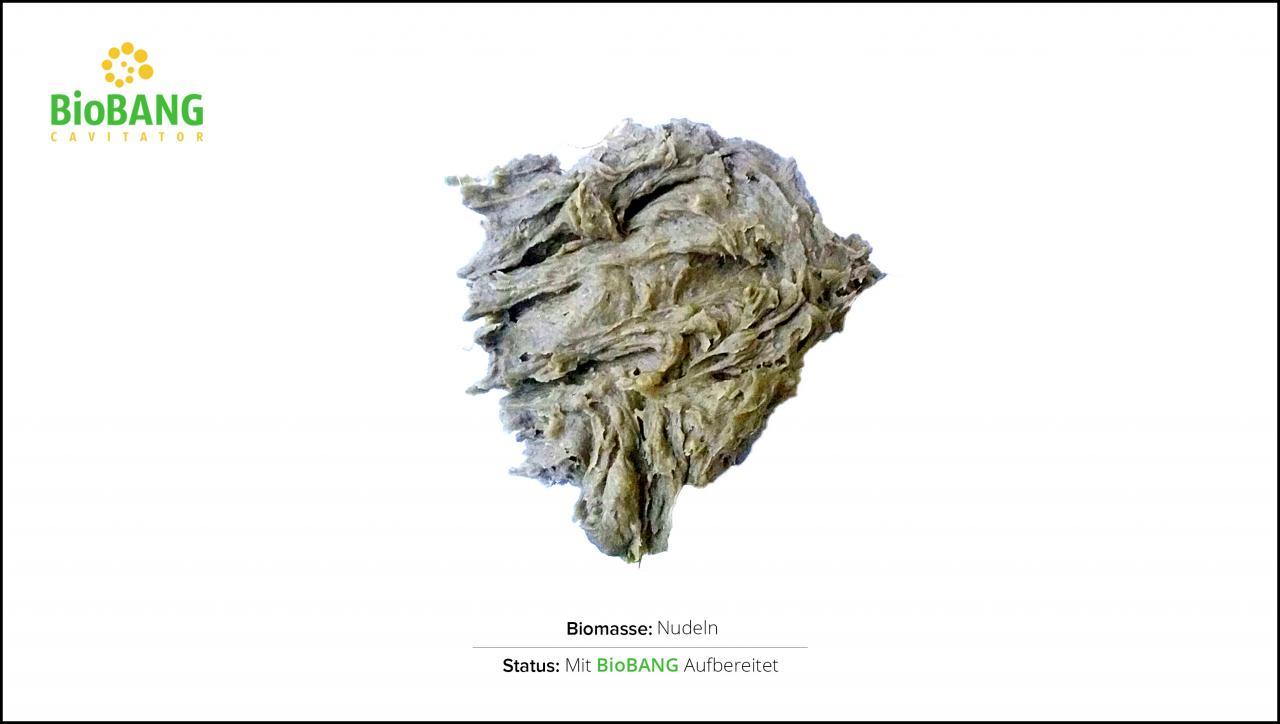 biomassen-test-nudeln-2