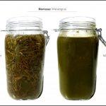 biomassen-test-wiesengras_4