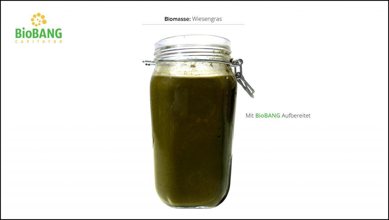 biomassen-test-wiesengras_6