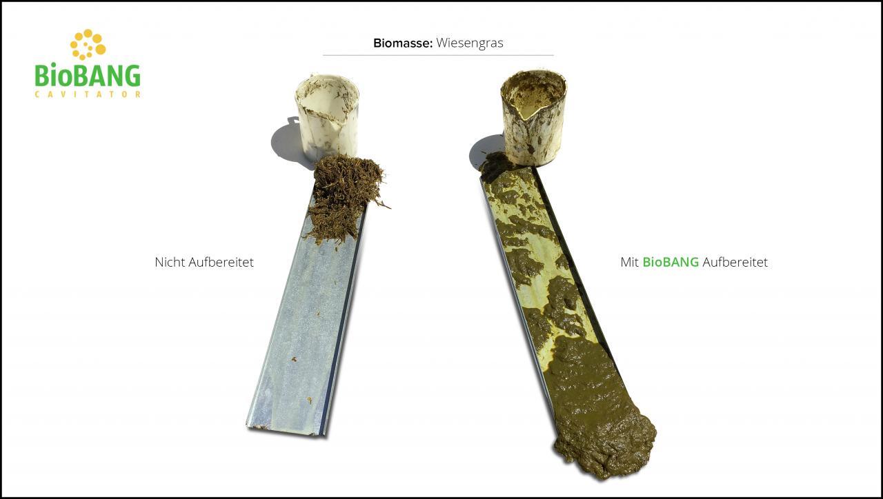 biomassen-test-wiesengras_7