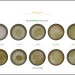 biomassen-test-wiesengras_8