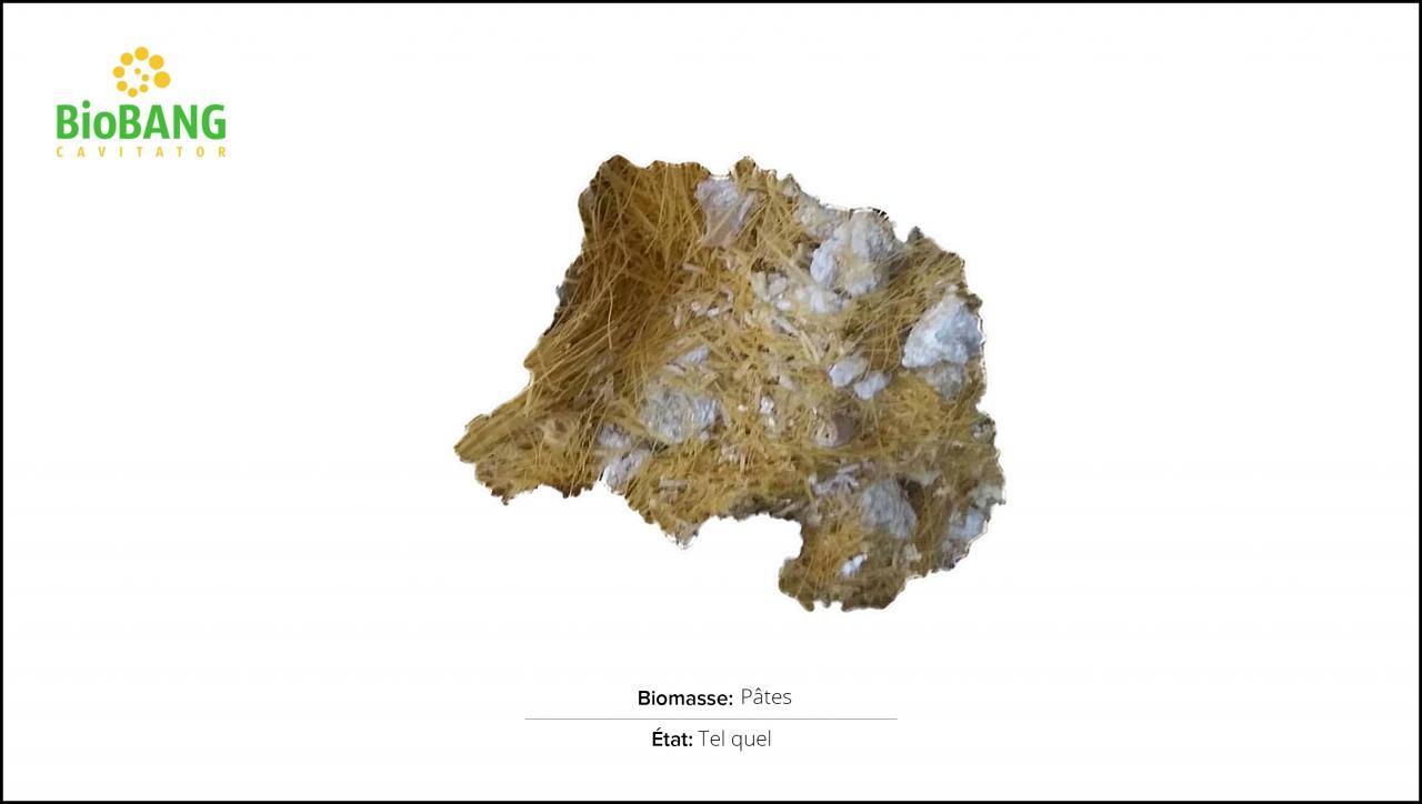 biomasses-test-pates-1