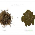 test-biomasses-pre-permanent_3