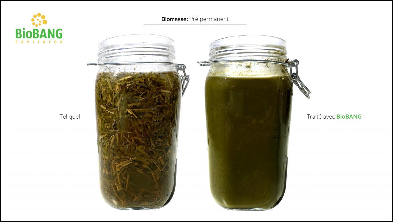 test-biomasses-pre-permanent_4