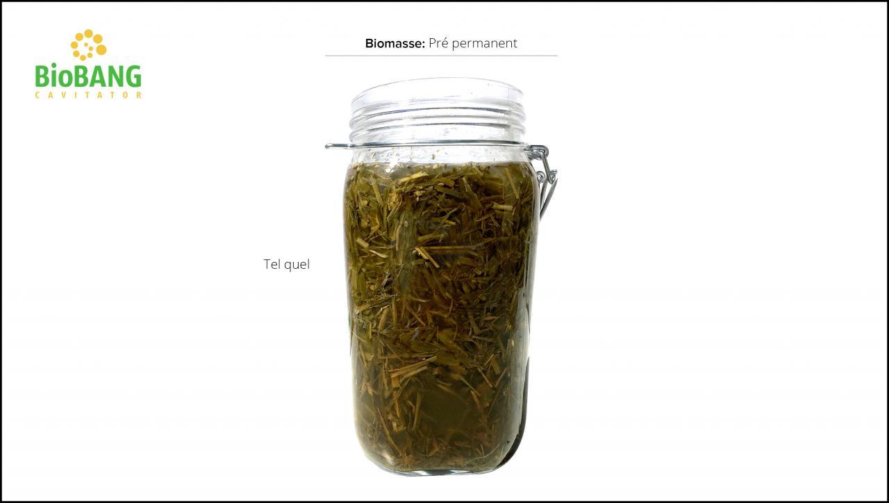 test-biomasses-pre-permanent_5