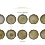 test-biomasses-pre-permanent_8